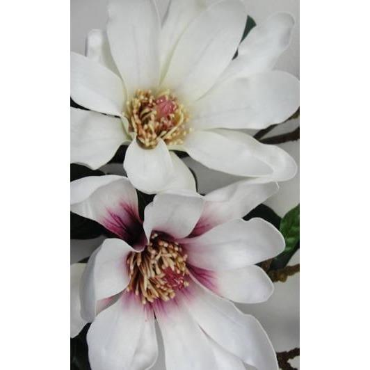 Royal Star Magnolia Flower Decorate Default Title Crisp Home