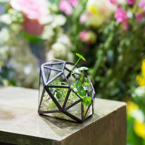 Glass Diamond Shaped Mini-Terrarium-ChowStuffs