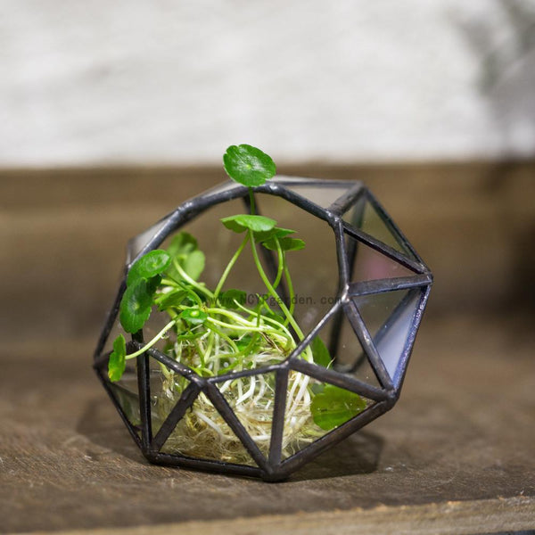 Glass Diamond Shaped Mini-Terrarium