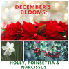 December's Blooms; Holly, Poinsettia & Narcissus
