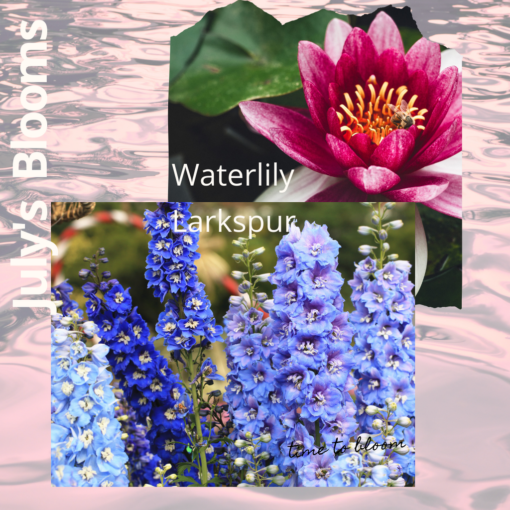 July's Blooms; The Larkspur & Waterlily