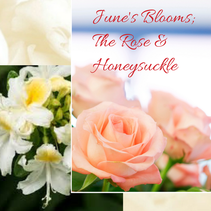 June's Bloom; The Rose and The Honeysuckle