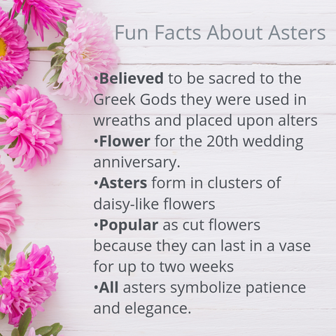 Fun Facts about Asters