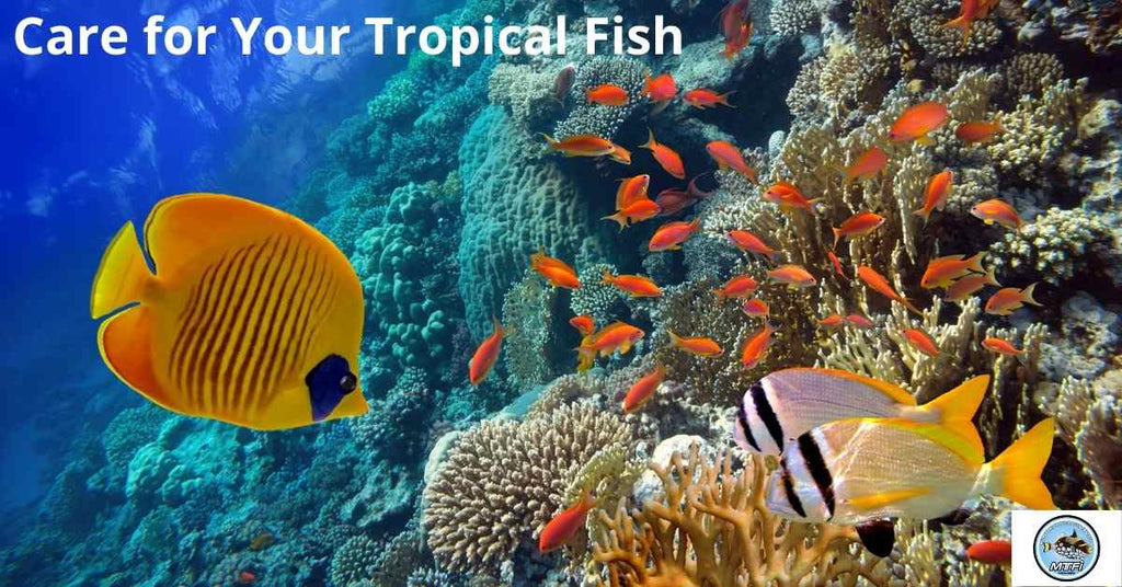 Care for Your Tropical Fish