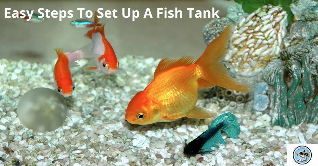 Easy Steps To Set Up A Fish Tank