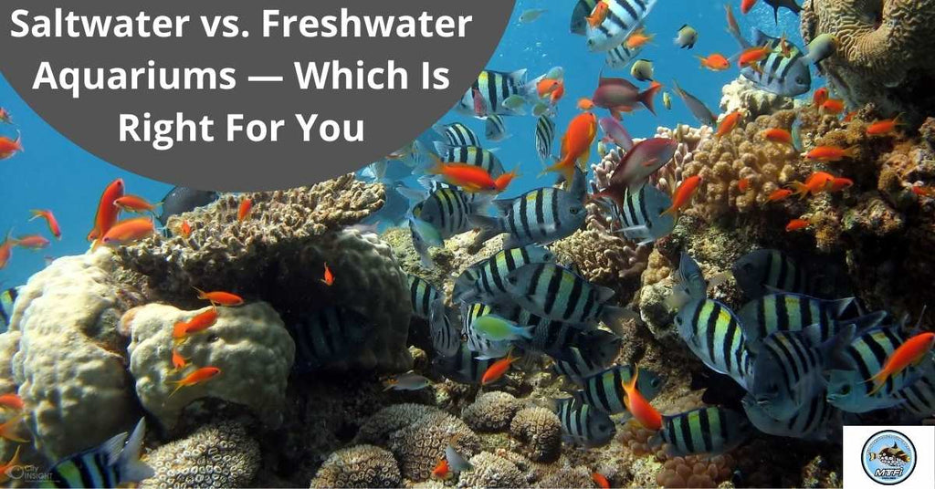 Saltwater vs. Freshwater Aquariums — Which Is Right For You