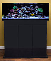 Nuvo Aquarium Shallow Reef 80 Black Filter, 2 Pumps, No Light