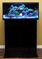 Nuvo Aquarium Shallow Reef 60 High Gloss Black Stand