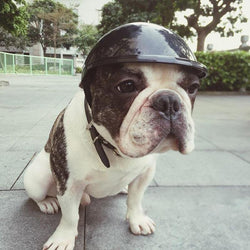 Dog and Puppy Motorcycle Helmets