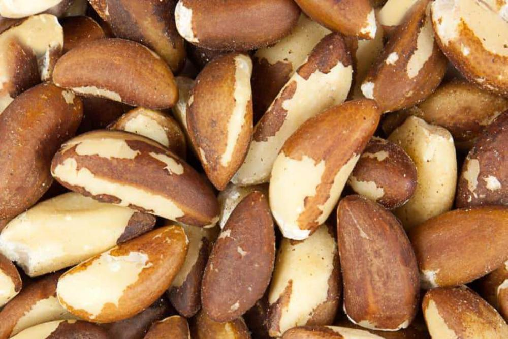 Brazil Nuts in the Raw