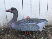 Goose - White Front Decoy – 6 Foldable And Collapsible Full Body Decoys (6 Decoys)