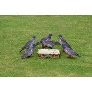Wood Pigeon Decoy –  Foldable and Collapsible Full Body Decoys (6 Decoys) - Fold Up Decoy