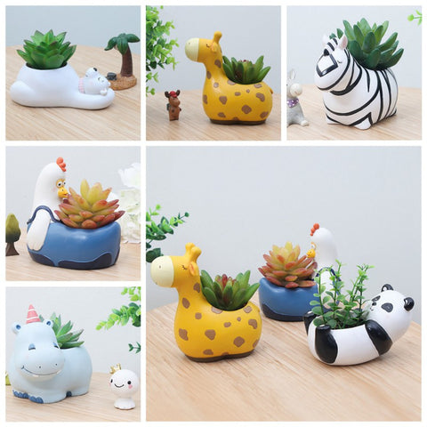 zoo collection succulent pots