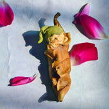 fairy leaf figurine with rose petals