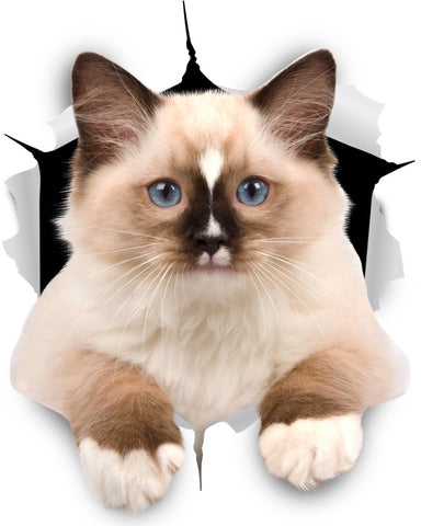 Brown Ragdoll Cat Sticker Decal - 2 Pack Exclusive