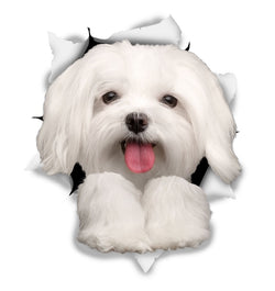 Cute Maltese Sticker Decals - 2 Pack - Exclusive