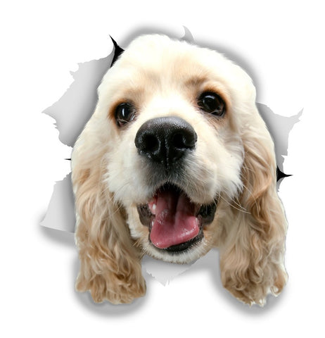 White Cocker Spaniel Sticker Decals - 2 Pack - Exclusive