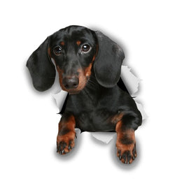 Black Dachshund Sticker Decals - 2 Pack - Exclusive