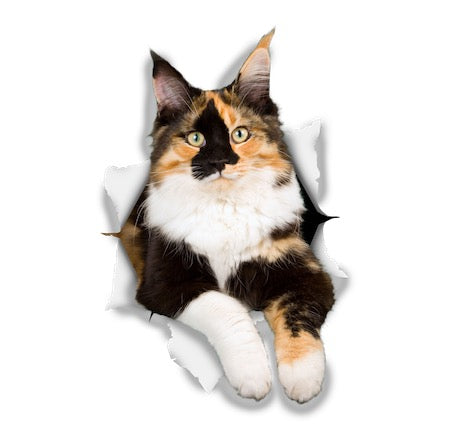 Calico Cat Sticker Decals - 2 Pack - Exclusive