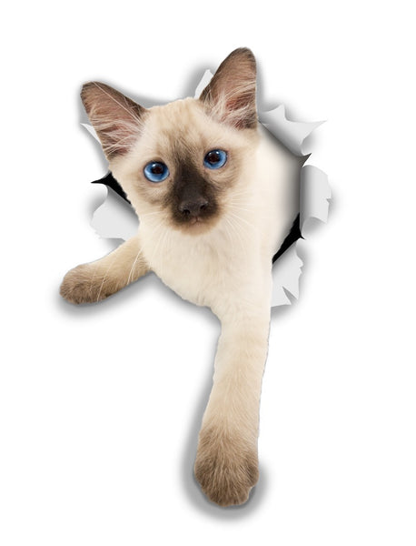 Siamese Kitten Sticker Decals - 2 Pack - Exclusive