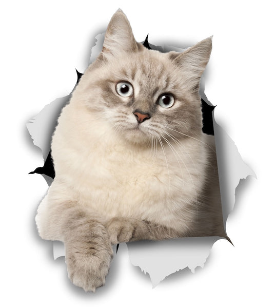 Siberian Kitty Sticker Decals - 2 Pack - Exclusive