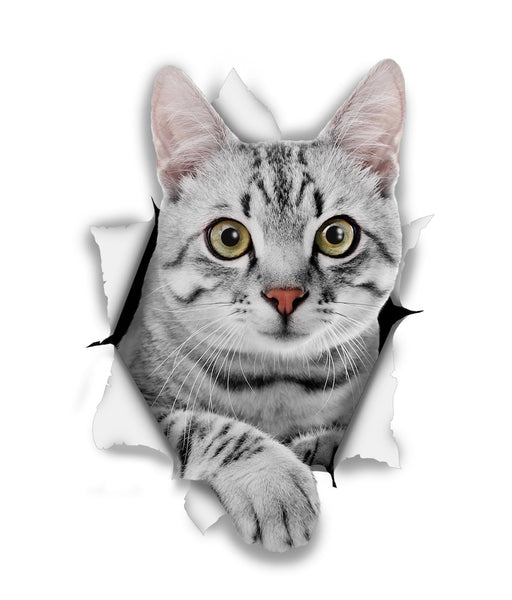 Grey Tabby Sticker Decals - 2 Pack - Exclusive