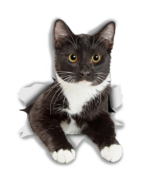 Resting Tuxedo Kitty Sticker Decals - 2 Pack - Exclusive