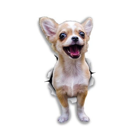 Excited Chihuahua Sticker Decals - 2 Pack - Exclusive