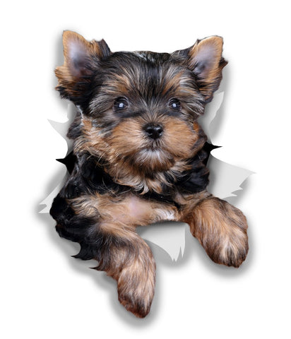 Cute Yorkshire Terrier Sticker Decals - 2 Pack - Exclusive