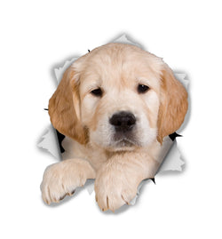 Golden Retriever Pup Sticker Decals - 2 Pack - Exclusive