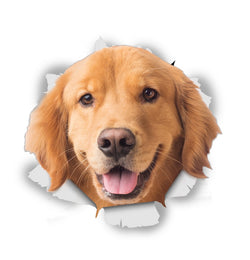 Happy Golden Retriever Sticker Decals - 2 Pack - Exclusive