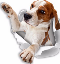 Reaching Beagle Decals - 2 Pack - Exclusive