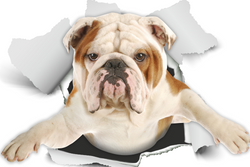 British Bulldog Decals - 2 Pack - Exclusive