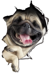 Pug Dog Decals - 2 Pack - Exclusive