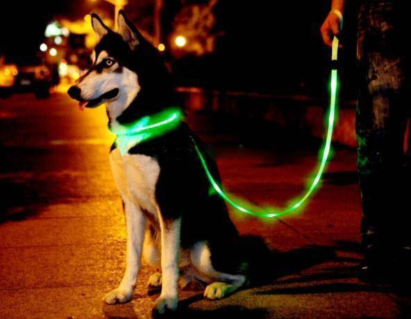 PetGlow LED Dog Leash - 36Bucks.com
