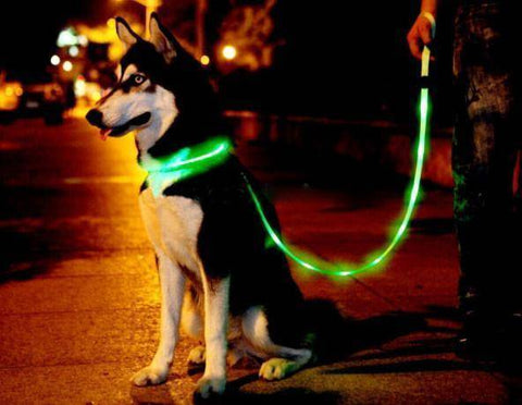 PetGlow LED Dog Leash