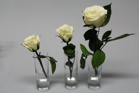 All About Different Types of Roses
