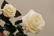 Magic Flower Company Grand Champagne and Premium Magic Preserved Rose