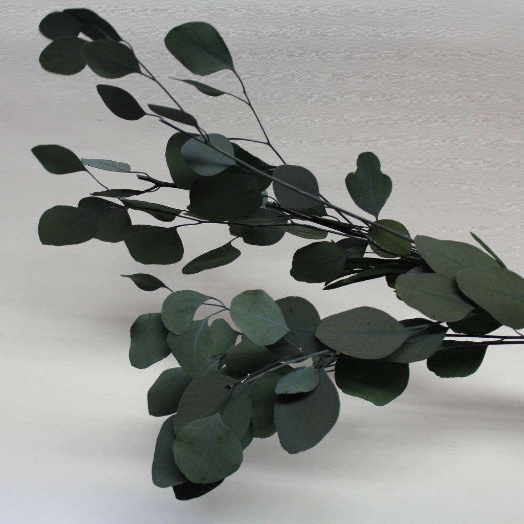 Magic Flower Company Magic Preserved Foliage Eucalyptus
