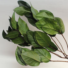 Green Shallon Leaves