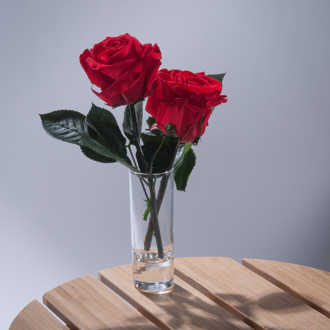 Double Magic Rose in sample vase