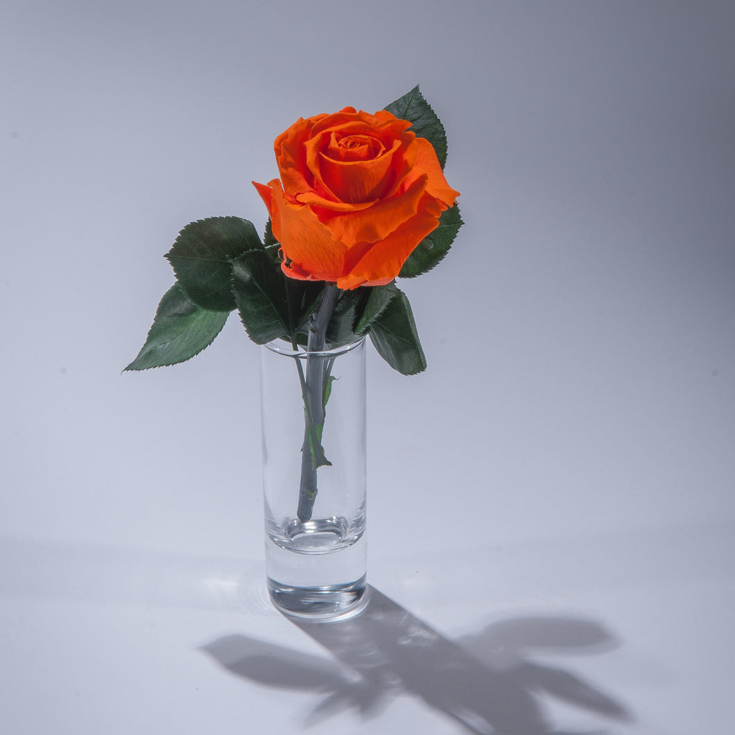 Single Magic Rose in sample vase