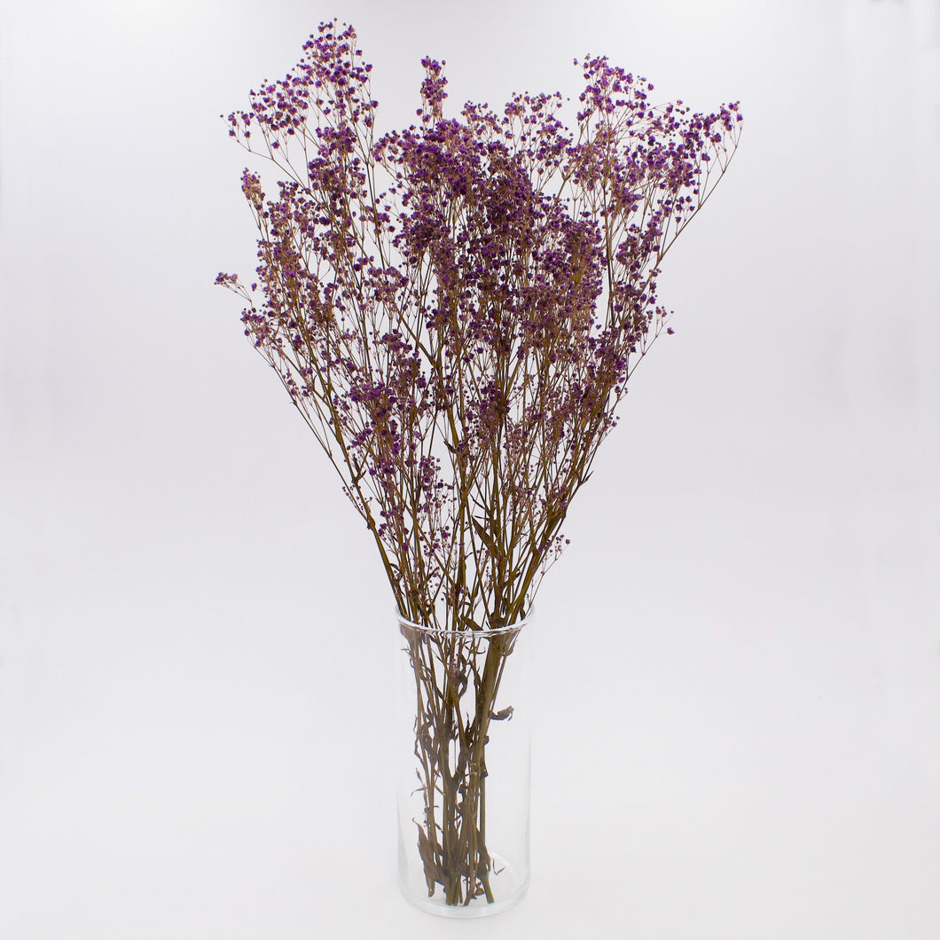 Purple Gypsophila