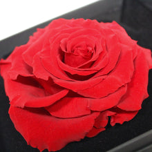 Large Rose Head in Gift Box