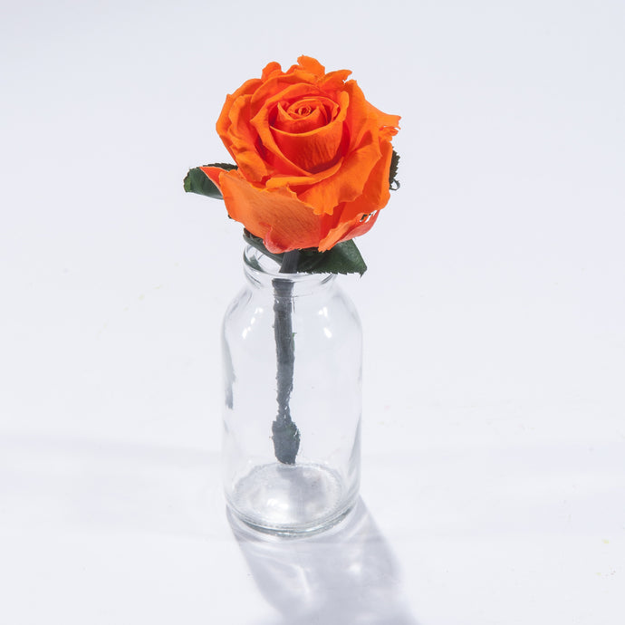Magic Rose in Mini Milk Bottle