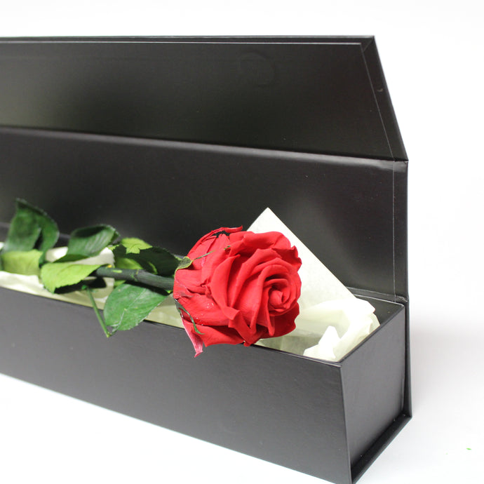 Presentation Rose in Gift Box
