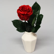 Double Magic Rose in Porcelain Vase