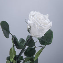 White Premium Magic Rose