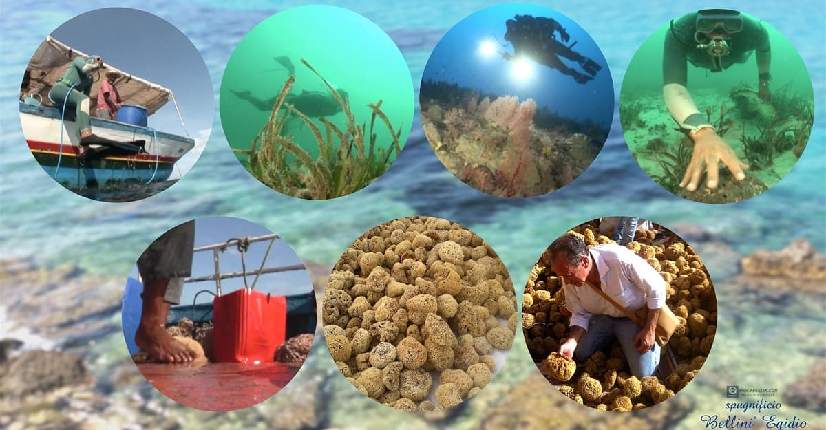 Bellini Sea Sponge are fished in a responsible and ecological method