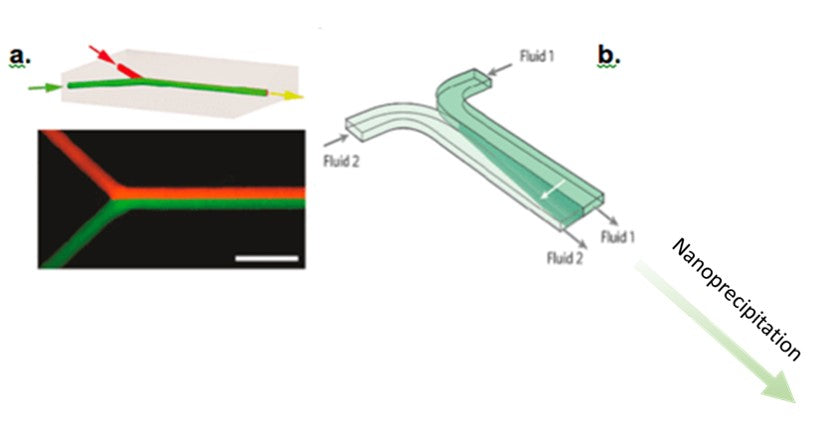 Principle of nanoparticle formation with a Y-shaped microfluidic device